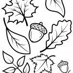 fall-leaves-acorns